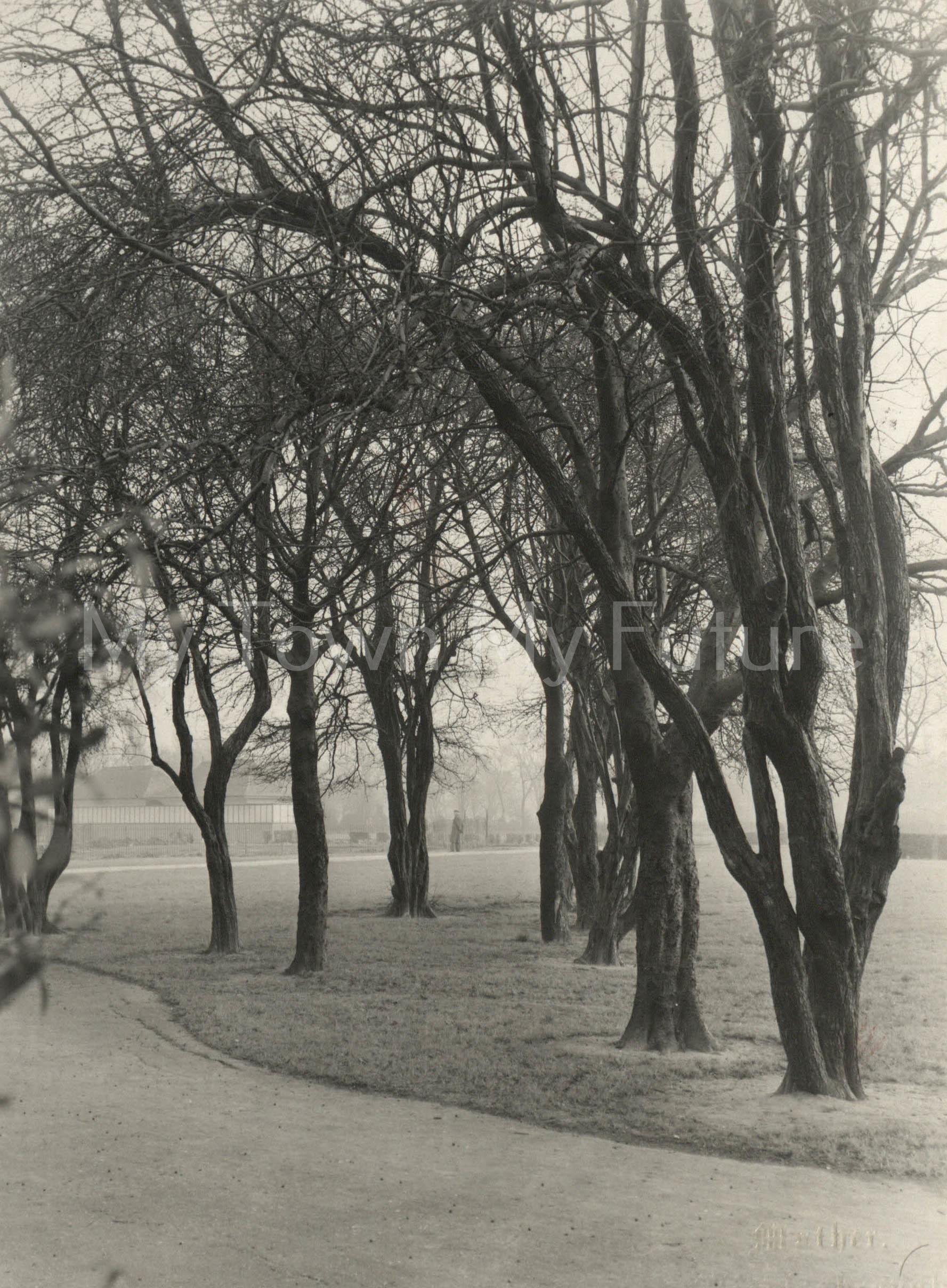 Albert Park - Sailor's Trod, February 1949, Mather's Photographers, 140 Linthorpe Road, Middlesbrough
