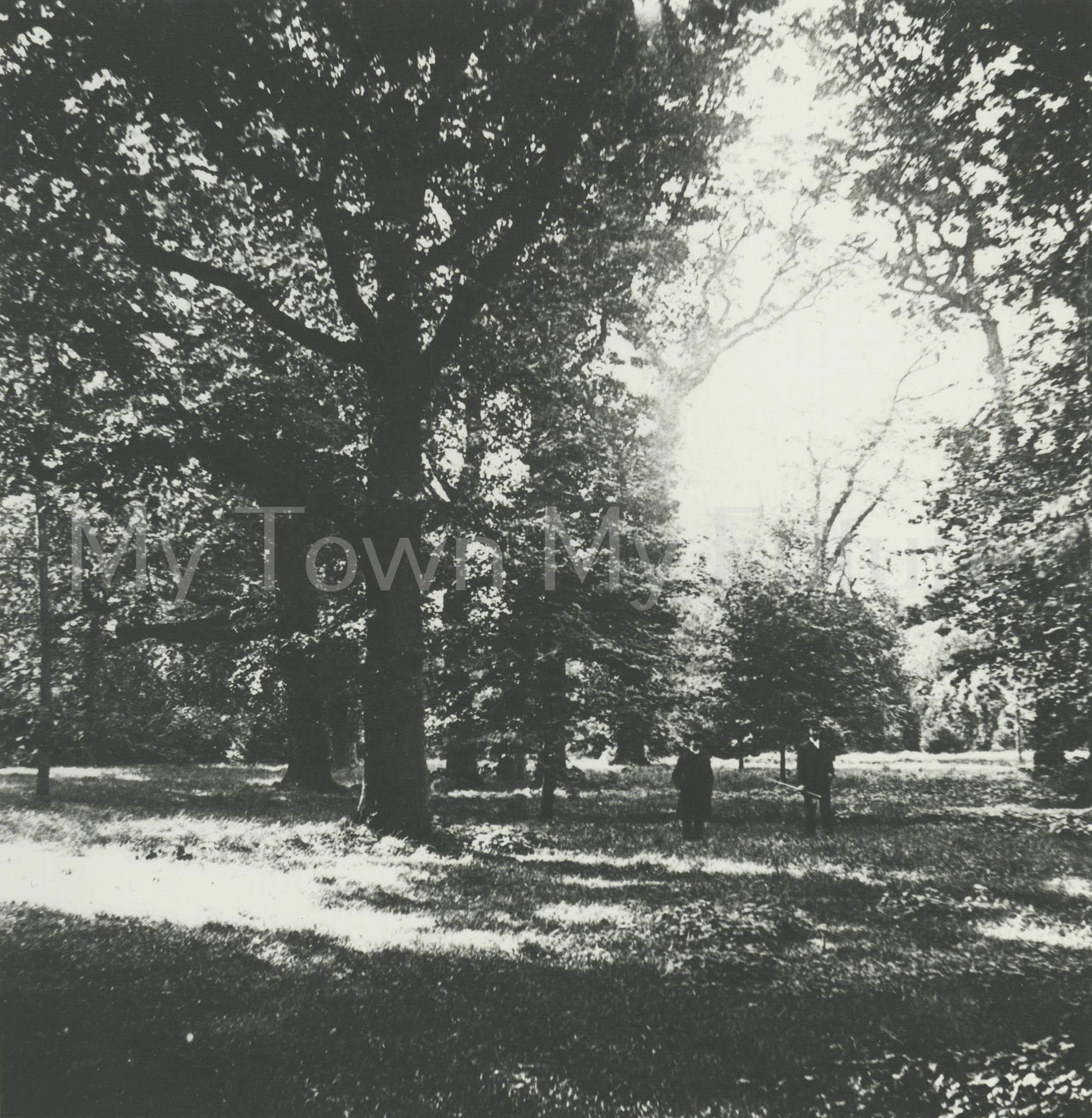 Kirkleatham Woods